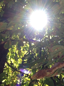 light through dappled leaves